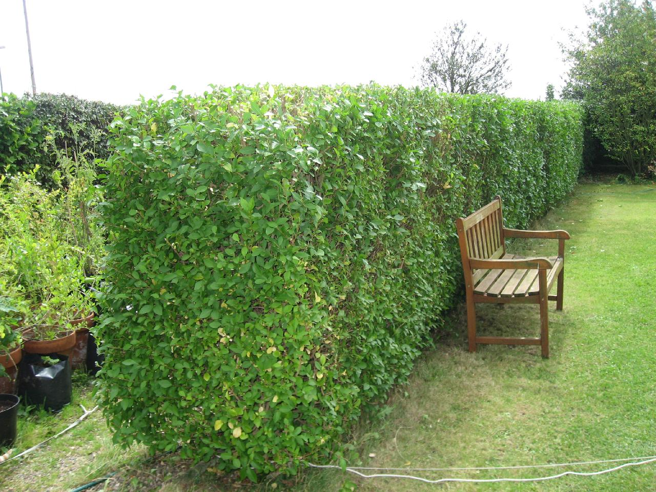 Garden services hedge cutting trimming reliable and for Gardening jobs cornwall